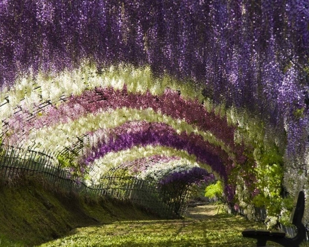 Whimsical-Wisteria-Gardens-and-Tunnel-in-Japan-1
