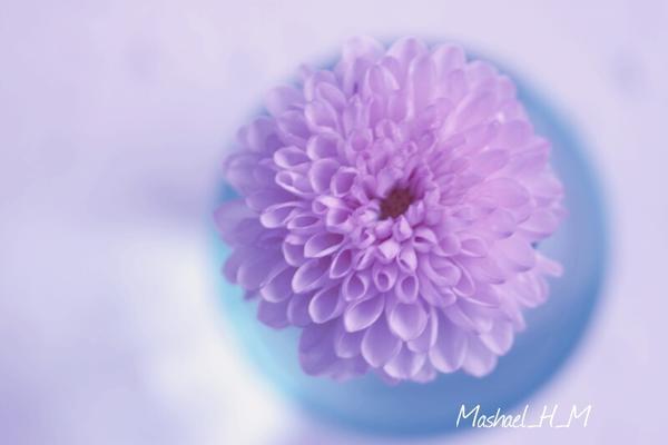 @Mashael_H_M